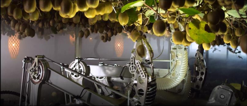 Kiwifruit picking robot